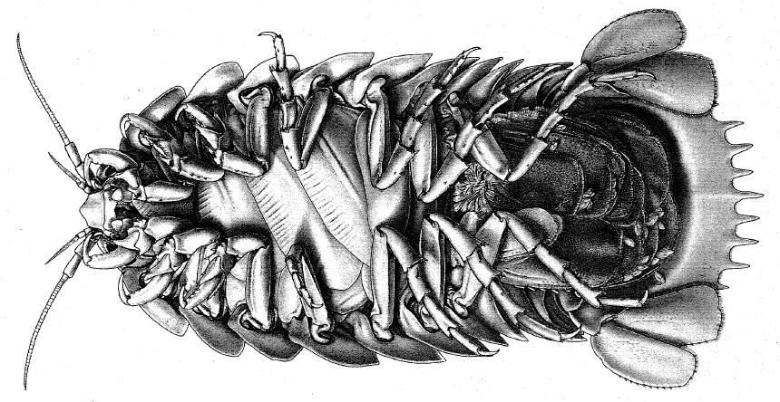 lloydbathynomus